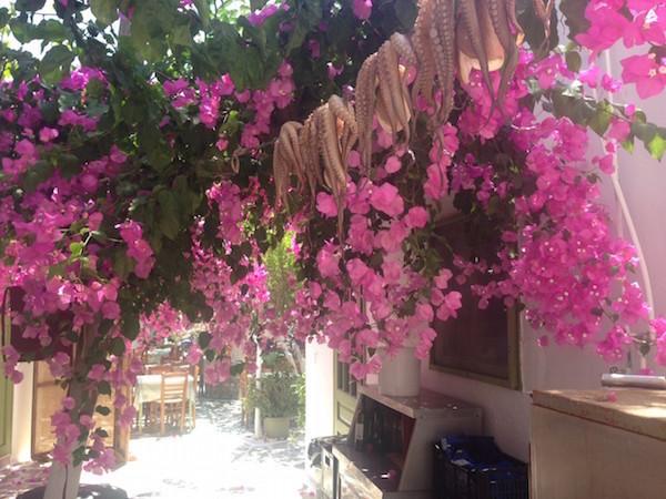 buganvillas rosas en isla griega