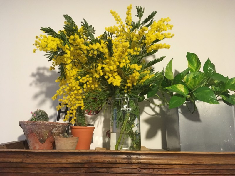 ramo de mimosa